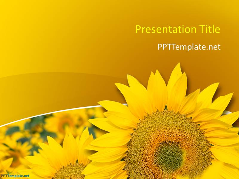 Free Sunflower PPT Template