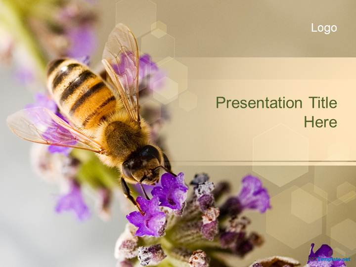 10036-02-bee-ppt-template-1
