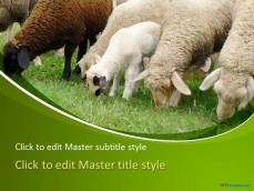 10060-01-sheeps-ppt-template-1