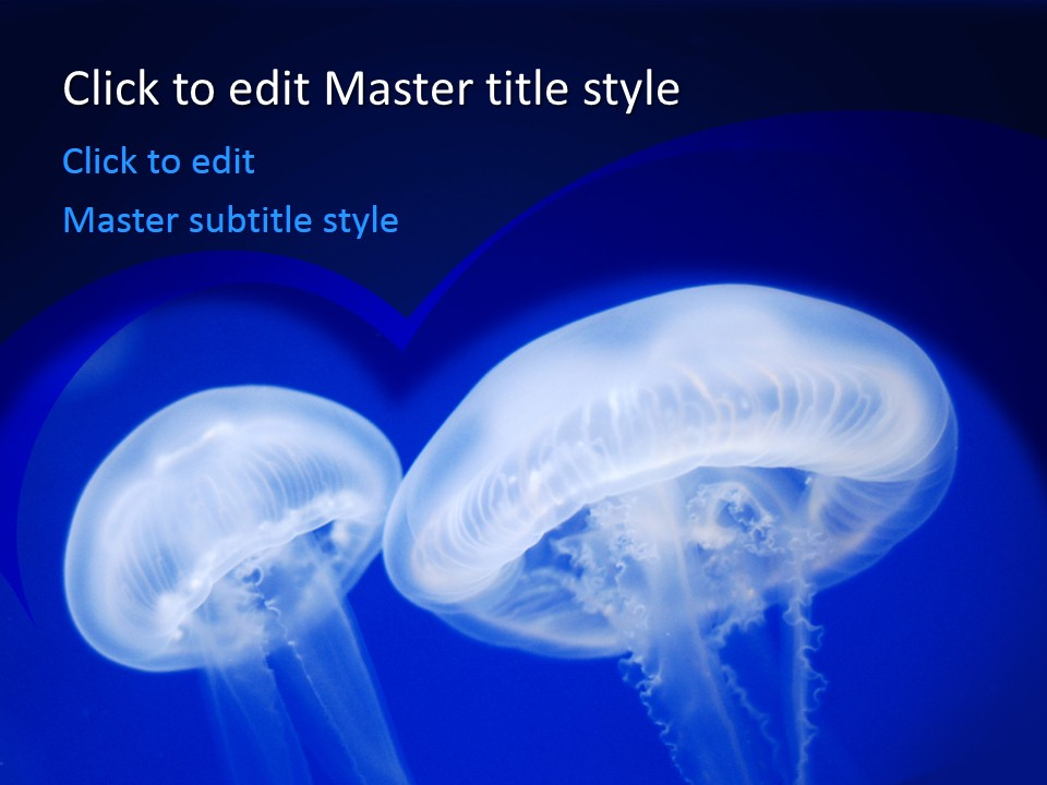 Free Jellyfish PPT Template