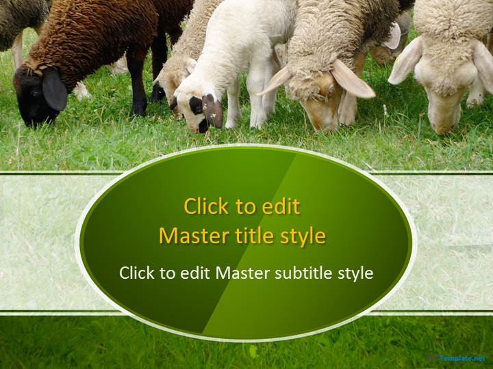 Free sheep ppt template free sheep in a field ppt template toneelgroepblik Images